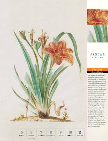 Thorbeckes Historischer Blumen Kalender 2015 Thorbecke Verlag Januar 2.Woche