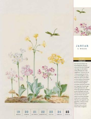 Thorbeckes Historischer Blumen Kalender 2015 Thorbecke Verlag Januar 2015 4.Woche